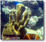 scuba dive coral reefs
